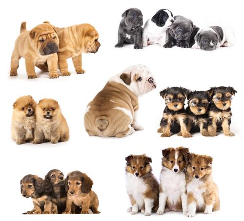 Consigli per cuccioli irrequieti: norme di comportamento
