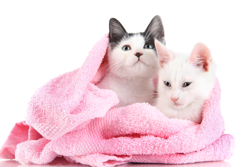 Dobbiamo fare il bagno al nostro gatto i miei animali - Fare il bagno al gatto ...