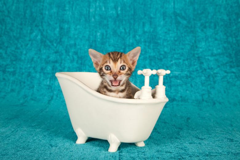 Il  bagno dei gatti