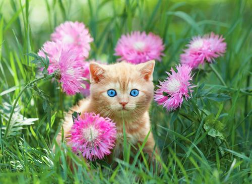 agire-febbre-gatti