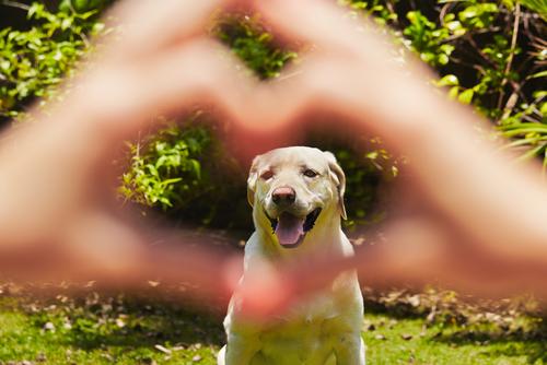 L'importanza dell'alimentazione per la salute cardiaca del vostro cane
