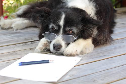 Artrosi nei cani: diagnosi e trattamento
