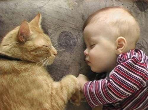 I bambini che crescono con gli animali: benefici