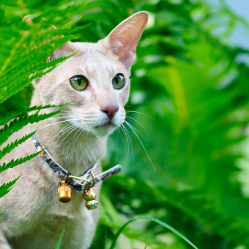 campanellino-gatto-3