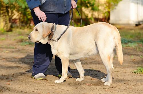 cane-al-guinzaglio2