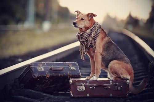cane-aspetta-padrone