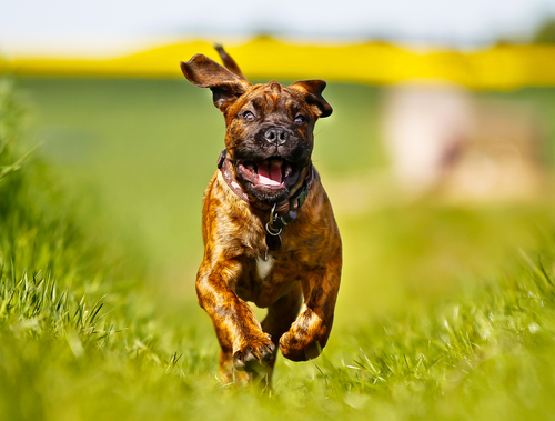 cane-che-corre