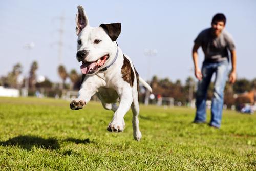 cane-che-corre1