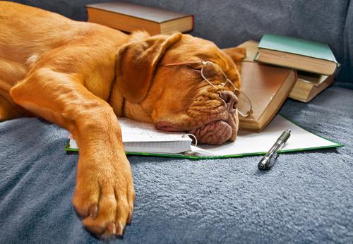 cane-che-dorme-2
