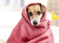 cane-con-asciugamano