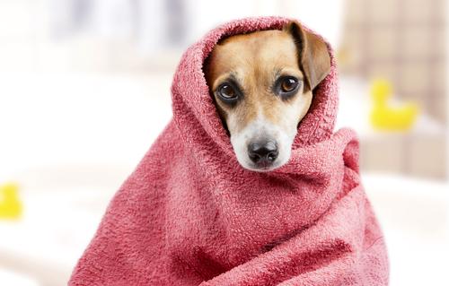 Preparate il vostro cane al bagno: come eliminare la paura e di cosa avete bisogno