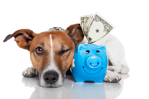 cane-con-soldi