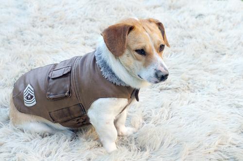 Perché è importante coprire i cani quando fa freddo?
