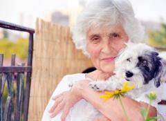 cane-e-anziano