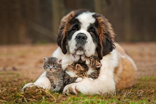 """Ha senso il detto """"essere come cane e gatto""""?"""