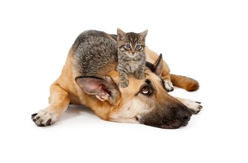 cane-e-gatto-3