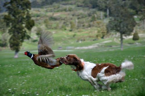 cane-e-uccello
