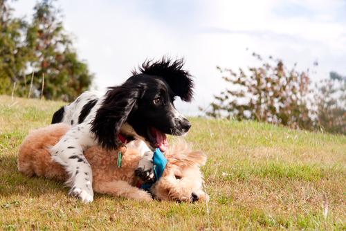 cane-giocando-2