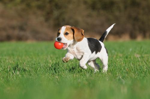 cane-giocando1