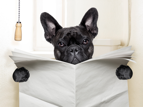 Come insegnare al cucciolo dove fare i bisogni