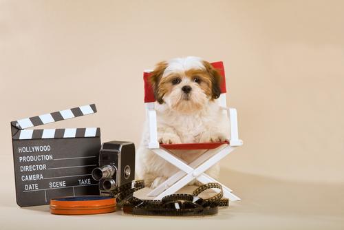 Addestramento dei cani per il cinema e per la tv