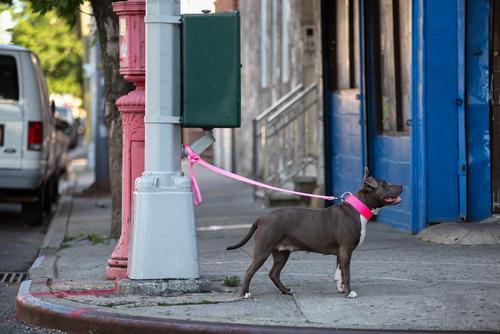 Perché è meglio non lasciare mai il vostro cane legato fuori da un negozio