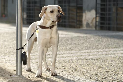 cane legato 3