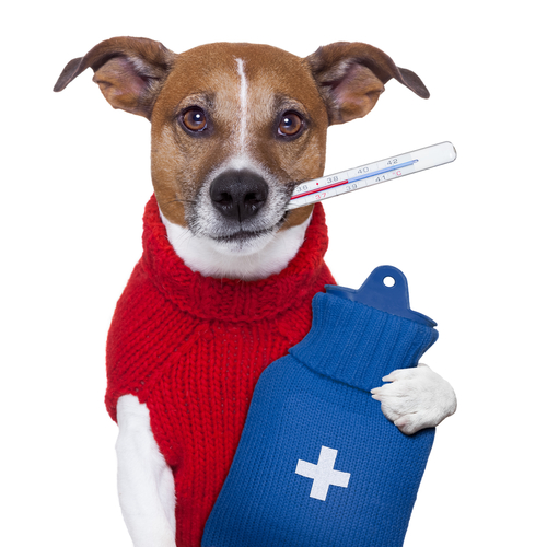 Come capire se il cane ha i parassiti intestinali