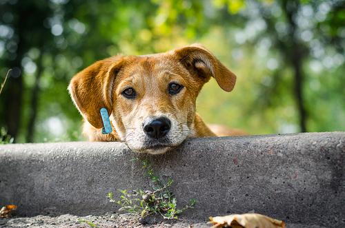 I cani meticci: molto più di una razza