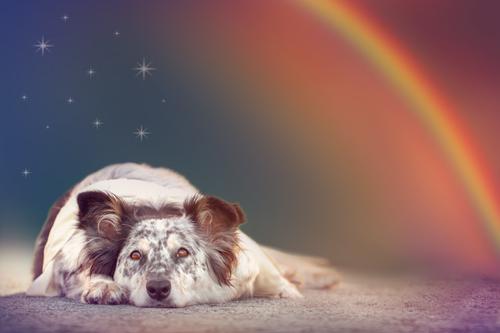 cane-mistico