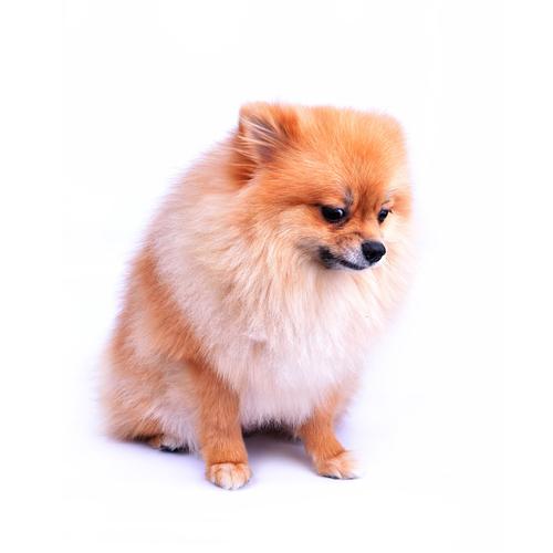 Trucchi per cani nervosi
