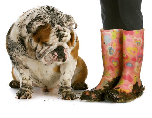 Perché il mio cane emana cattivi odori?