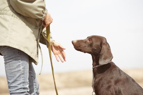 cane-risponde-richiamo2