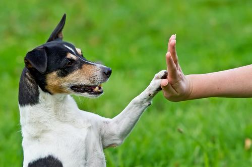 cane-risponde-richiamo3