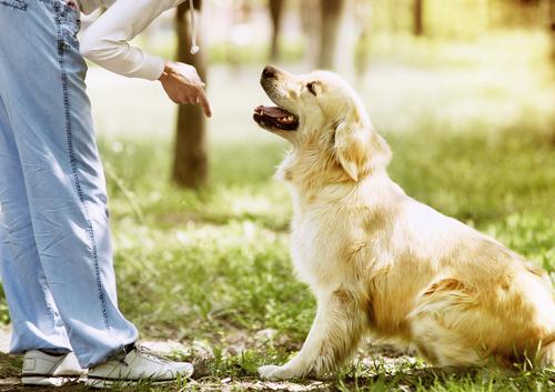 """L'ordine """"fermo"""" nell'addestramento canino"""