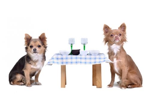 cani-a tavola