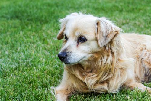Prendersi cura dei cani anziani