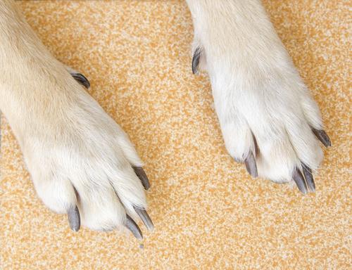 cani-che-grattano-2