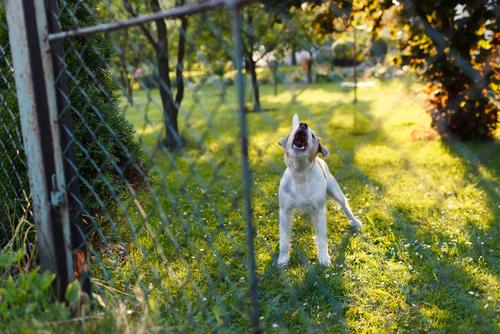 Animali e rumori: come aiutarli?