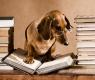 cani-nella-letteratura