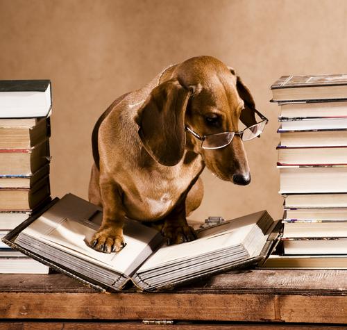 I cani nella letteratura