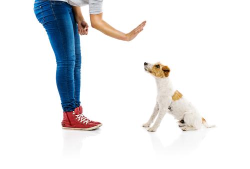 cattivo-comportamento-cane-2