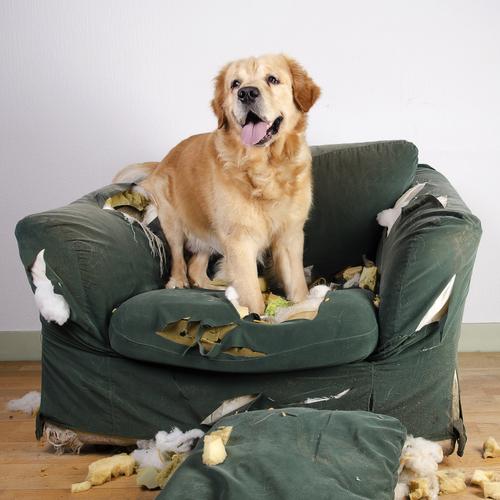 I segreti per correggere il comportamento del vostro cane