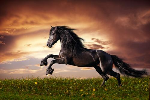 Cavalli: da dove provengono?