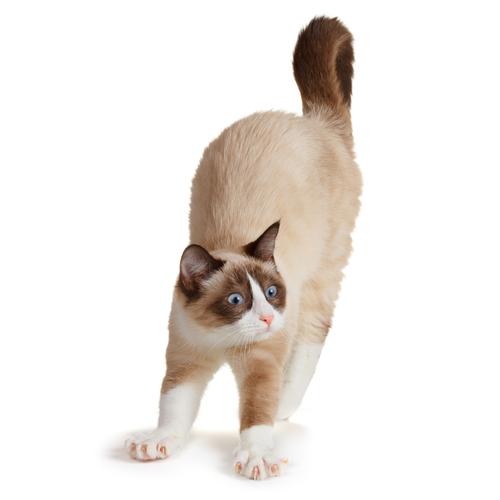 Cosa dice la coda del vostro gatto?
