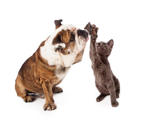 Un compagno per il vostro gatto: una buona idea?