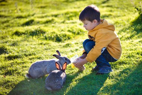 curiosità-conigli3