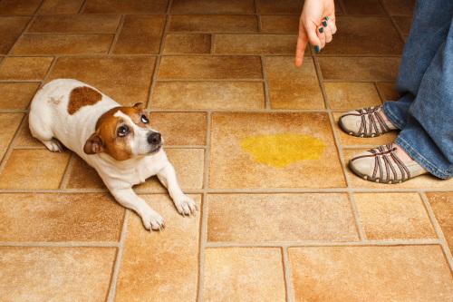 eliminare-urina-di-cane-2-e1418698386915