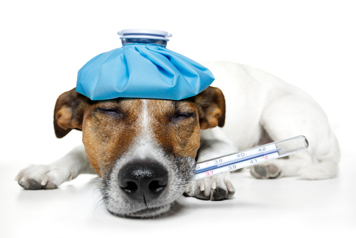 Sintomi di emorragia nei cani