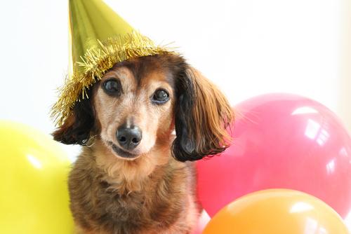 età-dei-cani-3